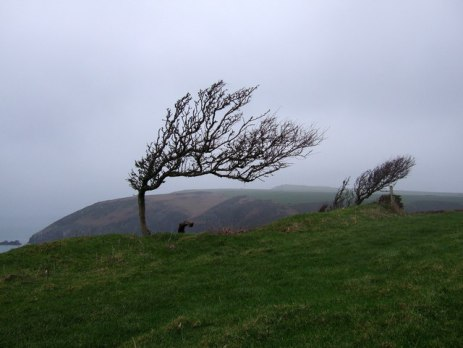 wind-sculpted_trees_on_the_pembrokeshire_coast_-_geograph-org-uk_-_298264.jpg