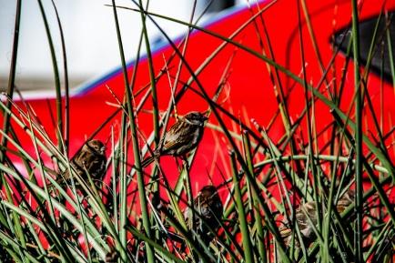 00s-birds-in-a-bush.jpg